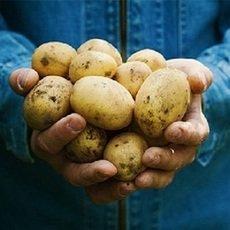 Potato set 6S carefully selected fresh potatoes